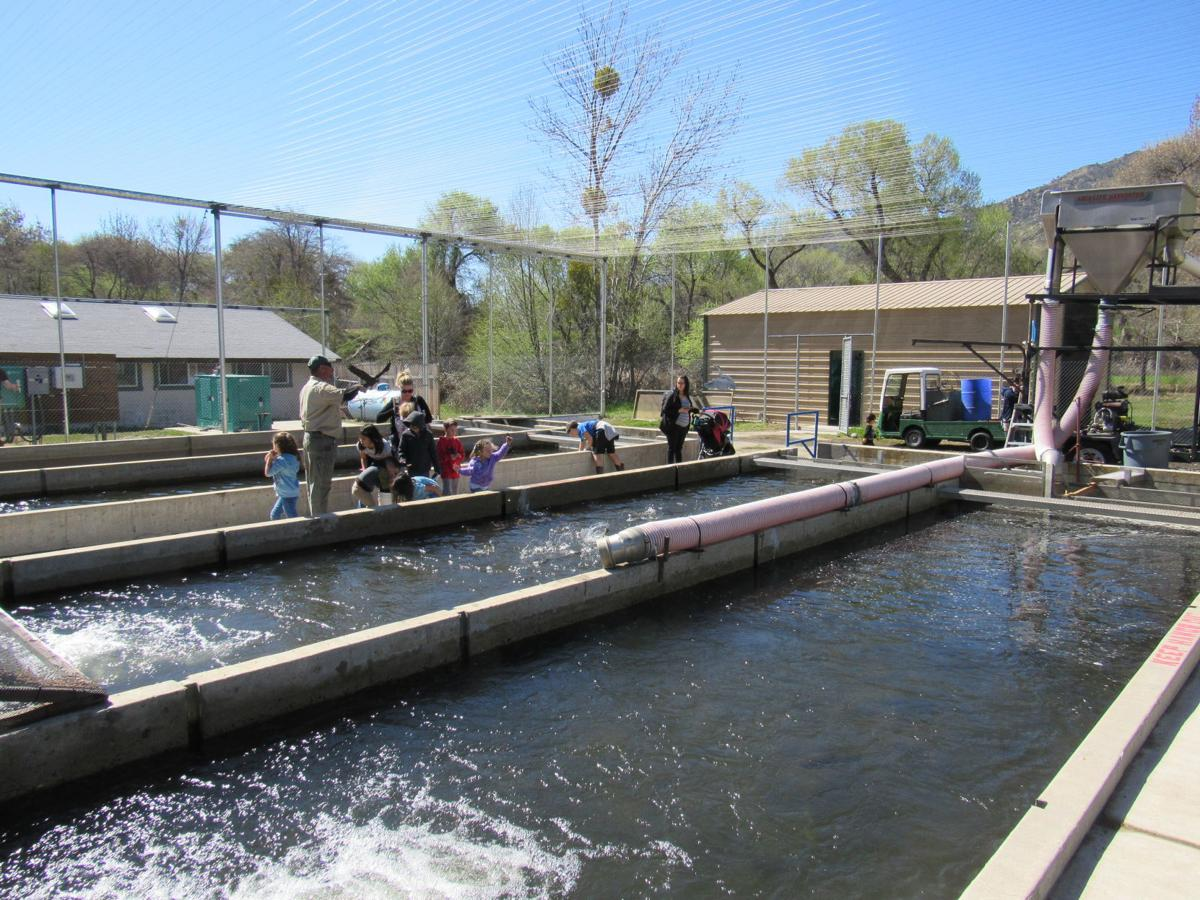 PHOTO GALLERY: Kid-friendly Kernville fish hatchery reopens