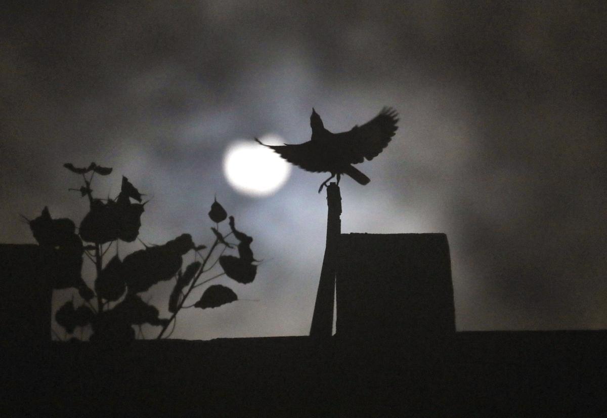 APTOPIX India Solar Eclipse