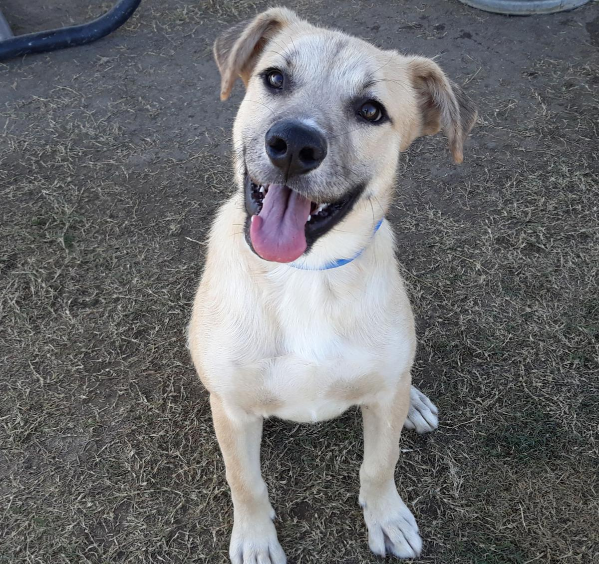 A1115030 Tanner