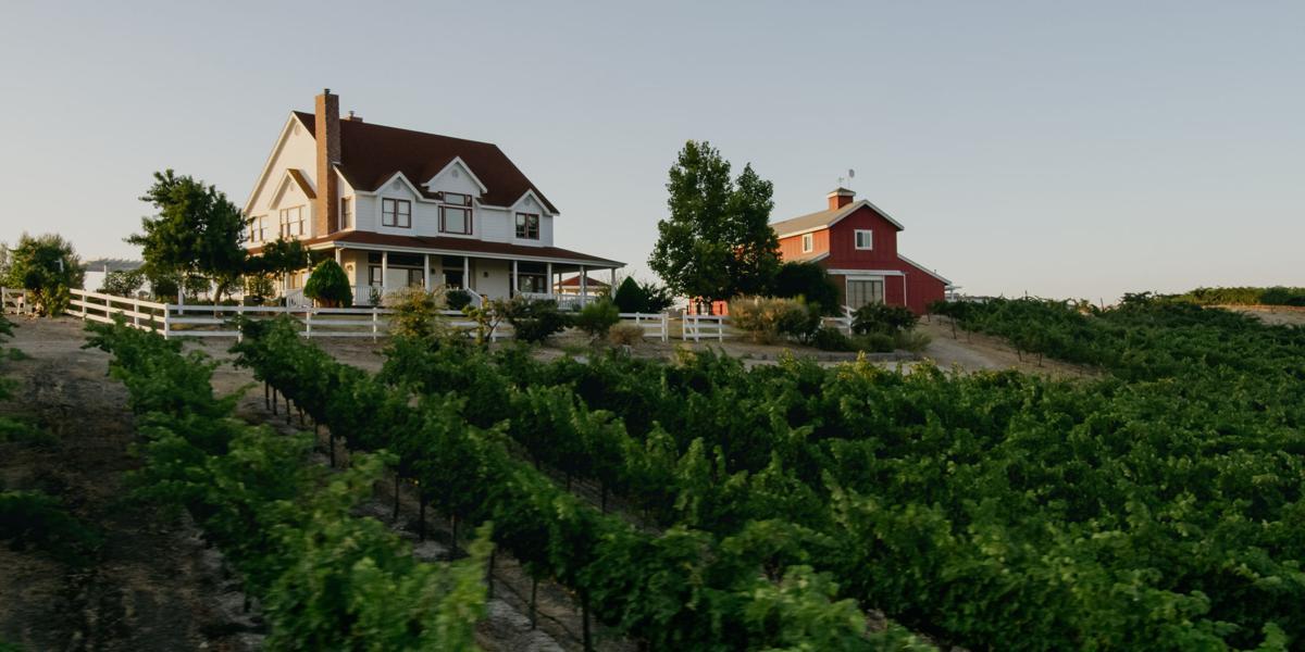 vineyard_13__72dpi 1