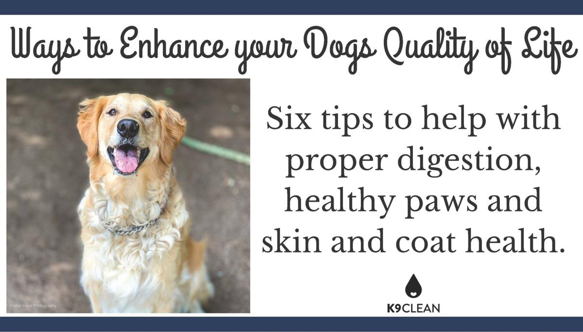 K9 Clean - Tips to help your dogs quality of life