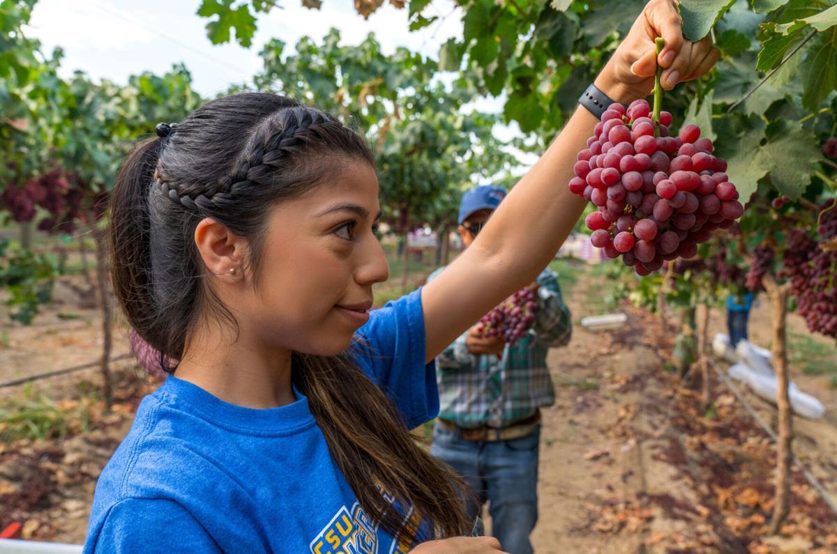 jazmin and grapes