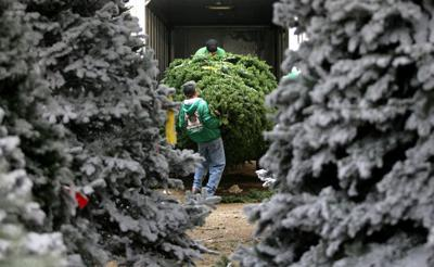 Oh Christmas tree, oh ...' where to buy yours | News | bakersfield.com