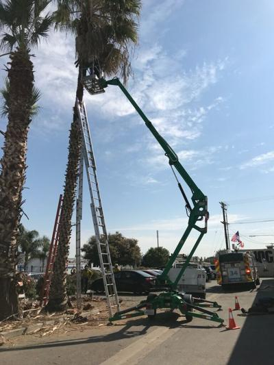 Tree trimmer rescued in Delano