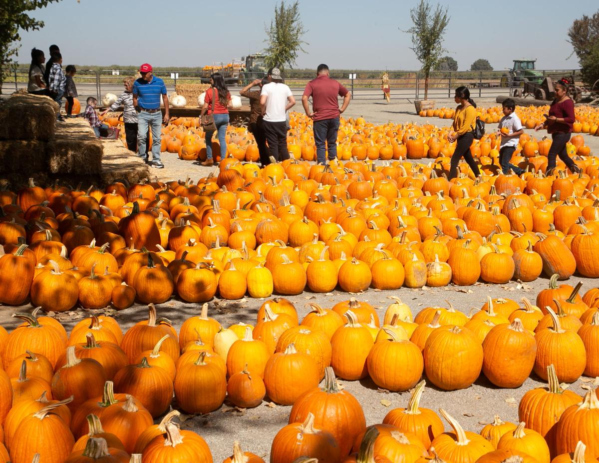 PumpkinPatch 21