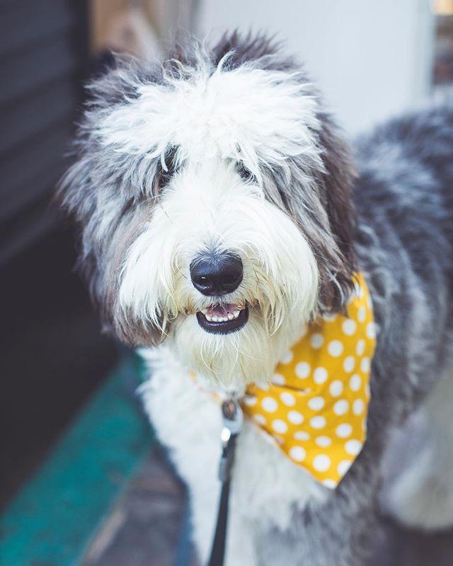 Lemon the dog