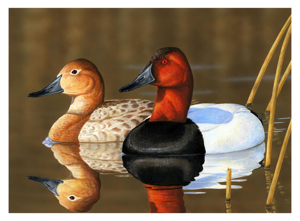2020 duck stamp