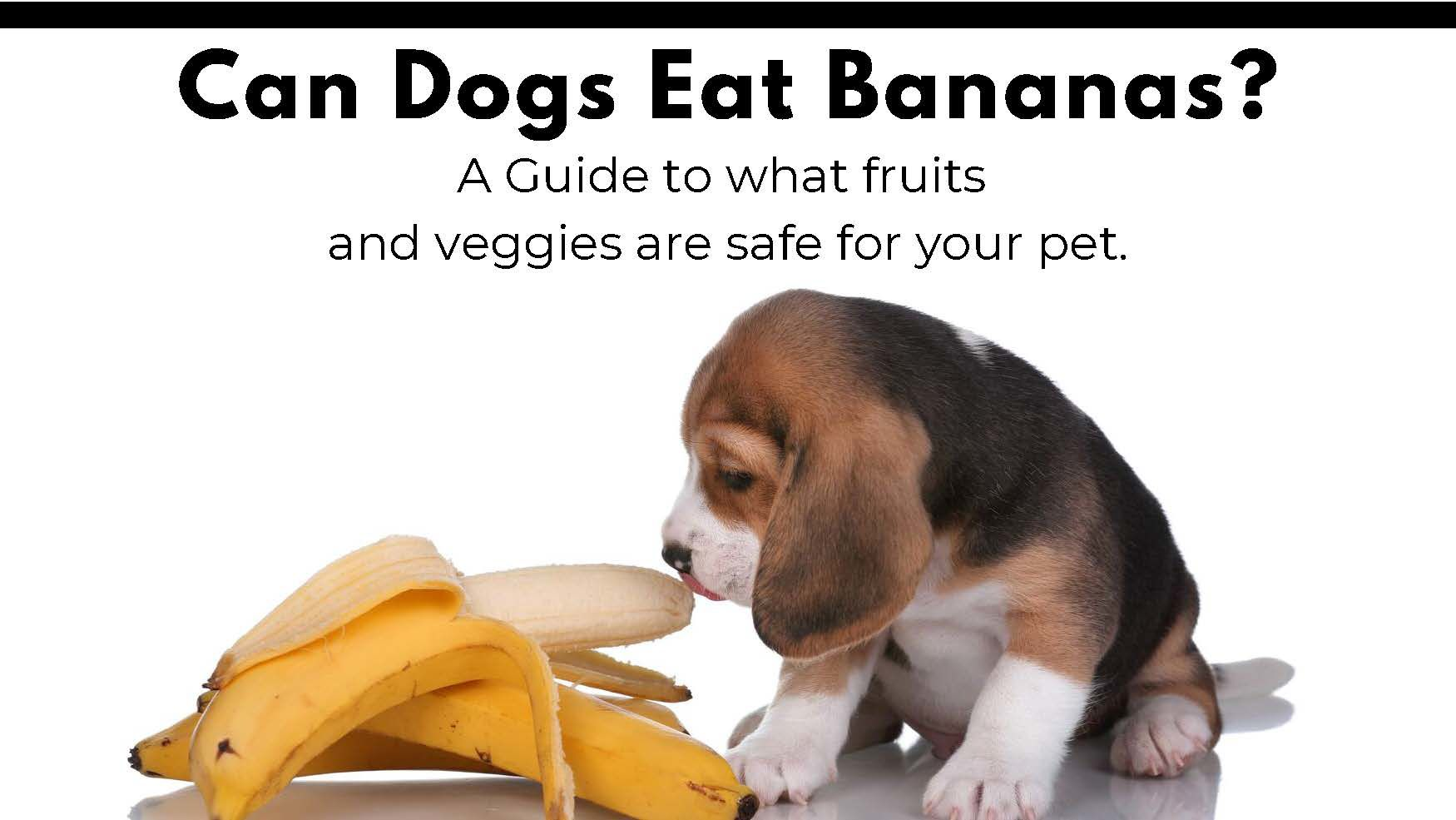 Can dogs eat bananas? A guide to what
