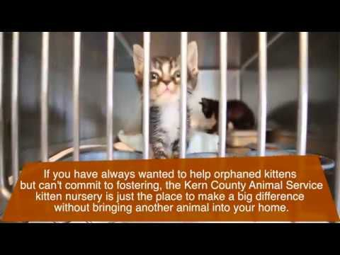 Smitten by kittens kcas seeks volunteers for new kitten nursery smitten by kittens kcas seeks volunteers for new kitten nursery entertainment bakersfield spiritdancerdesigns Images