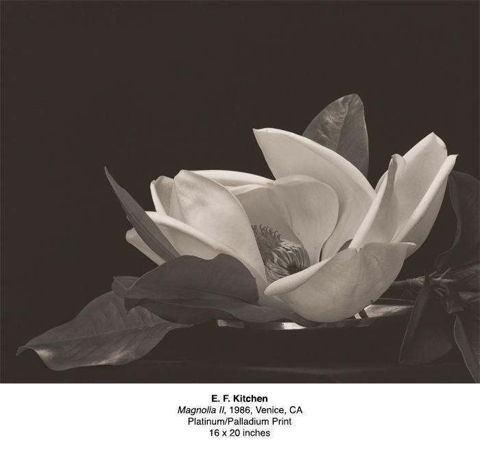 Platinum-Kicthen Magnolia II