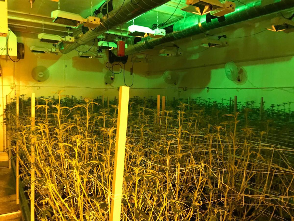 Marijuana grow 2