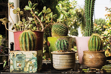 Bakersfield Cactus and Succulent Society