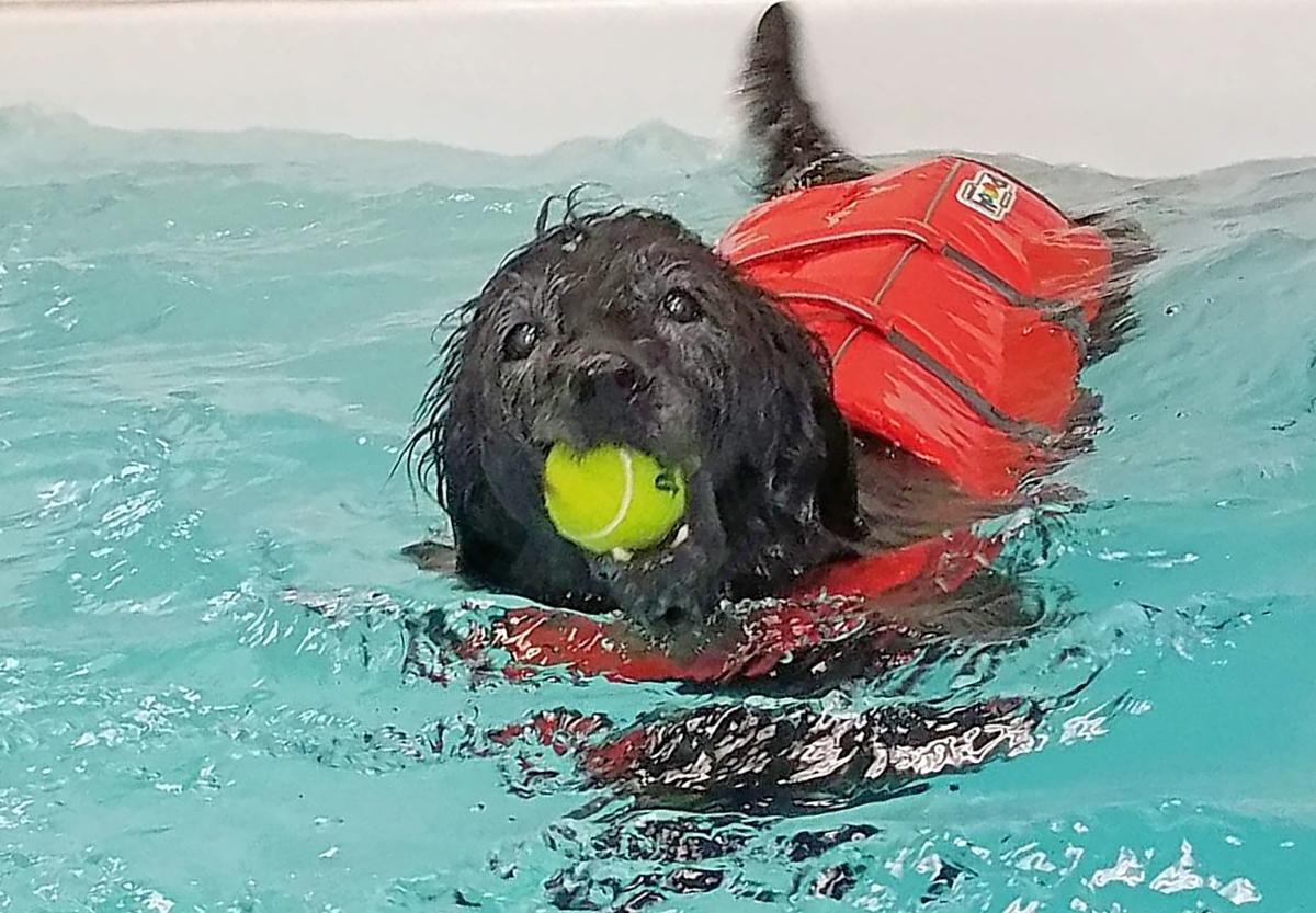 Swimming Bella.jpg