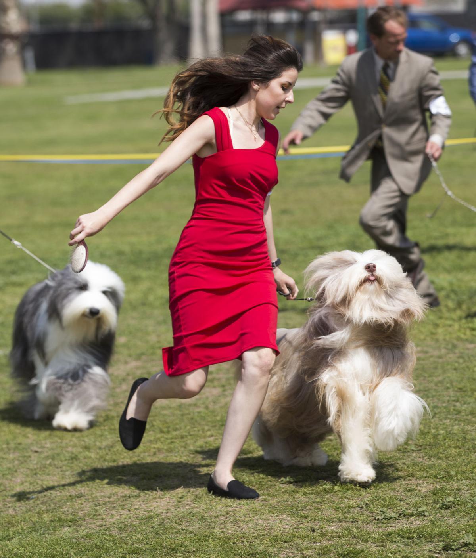 Kern County Dog Show