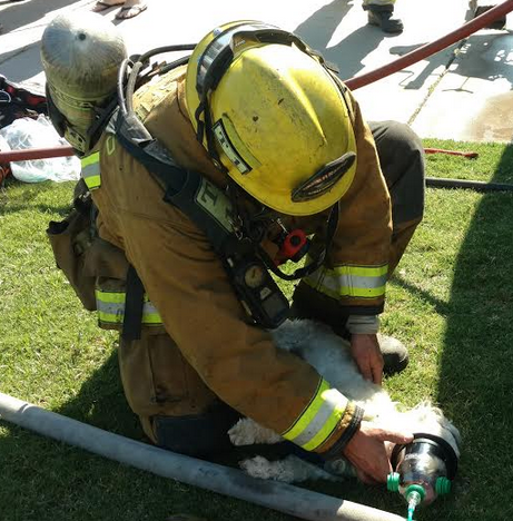 Firefighters save dog from burning house with help of pet oxygen mask