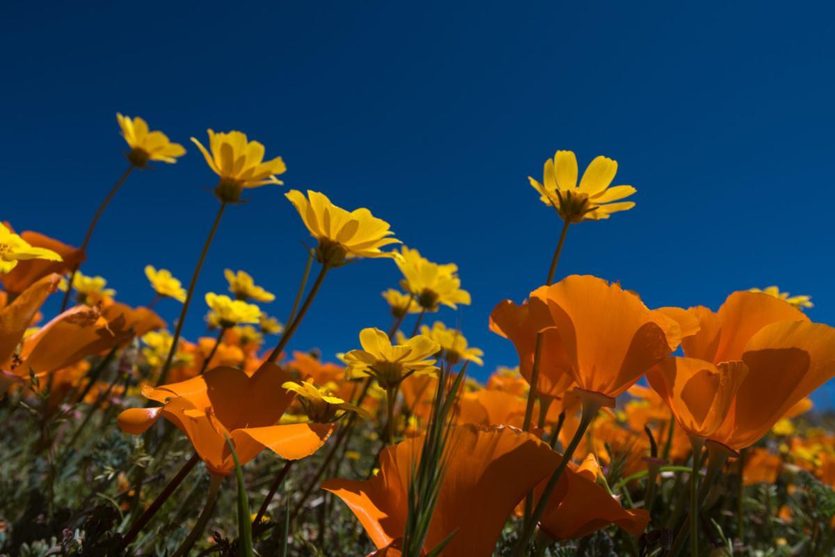 Photo courtesy of Tejon Ranch