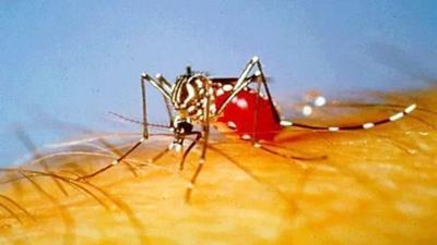 Human cases of West Nile virus reported in Kern (copy)