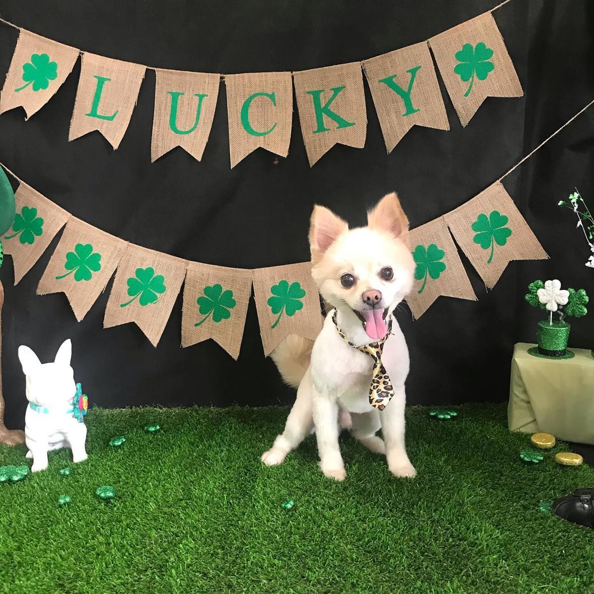Doggie Do's Pet Salon