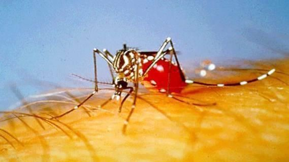 Human cases of West Nile virus reported in Kern