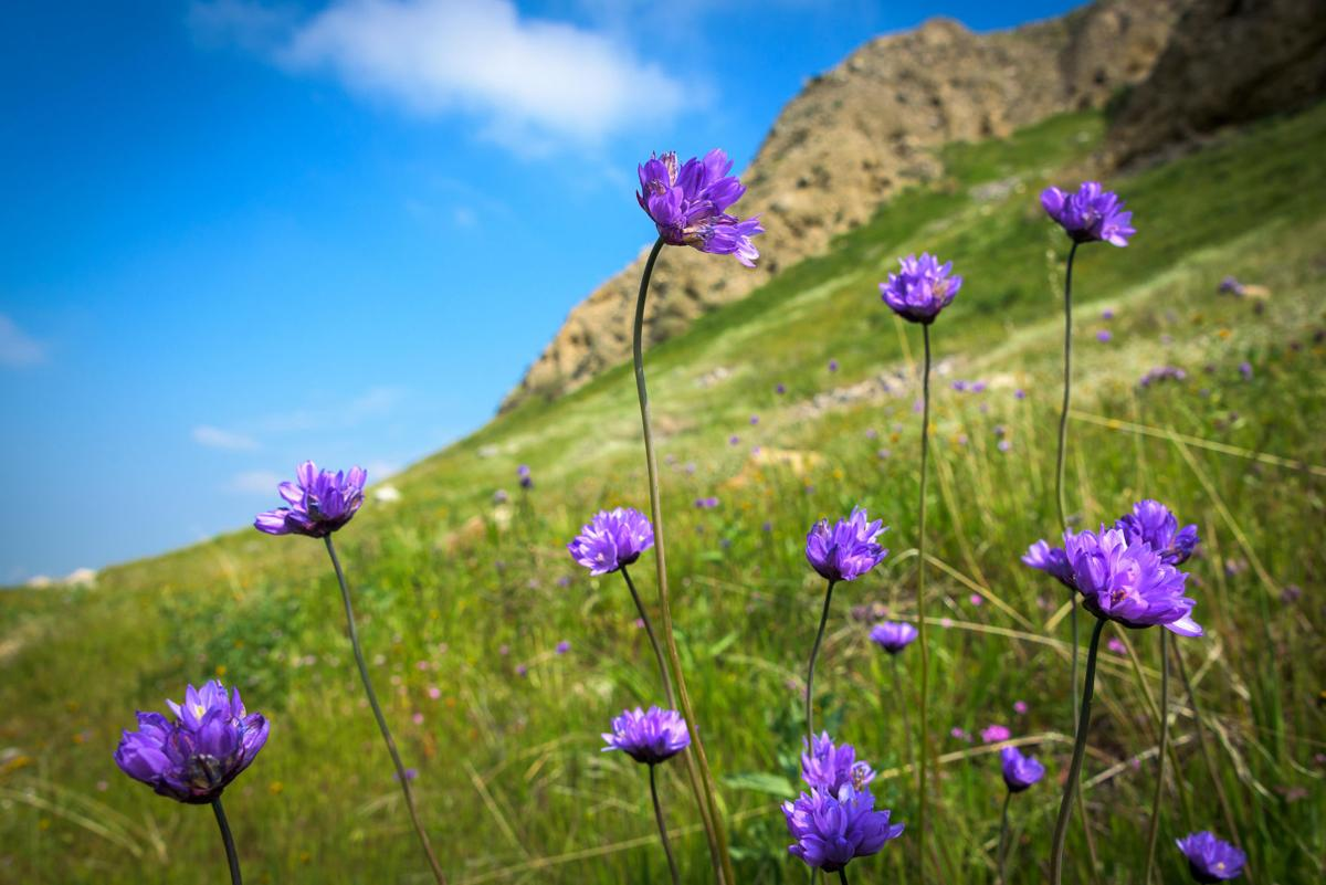Spring Nature Festival 6 Aaron Collier. Wildflowers. 2017 fe