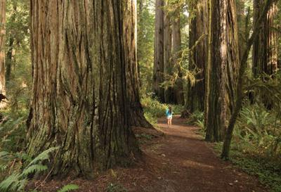 Best Local Hikes with Kids