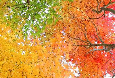 Where to See Fall Colors in the Bay Area
