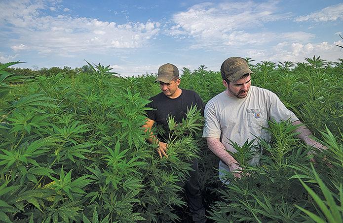 PA hemp farmers