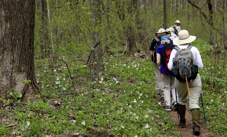 Thompson Wildlife Management Area VA hikers