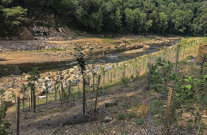 Bloede dam site shoreline