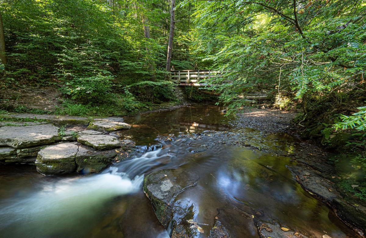 Hemlocks in Ricketts Glen State Park, PA