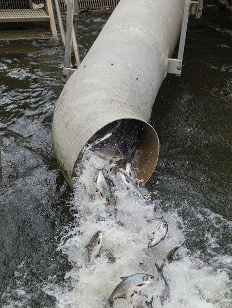 Exelon, USF&WS agree on upgraded fish passage at Conowingo