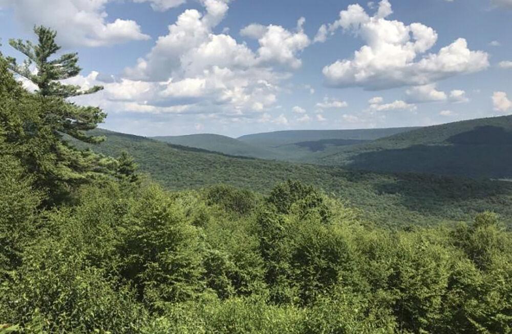 Appalachian forest in PA