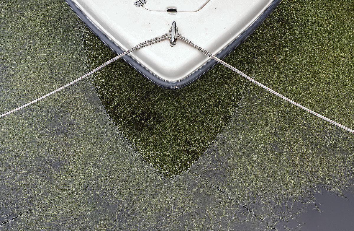 SAV by boat bow