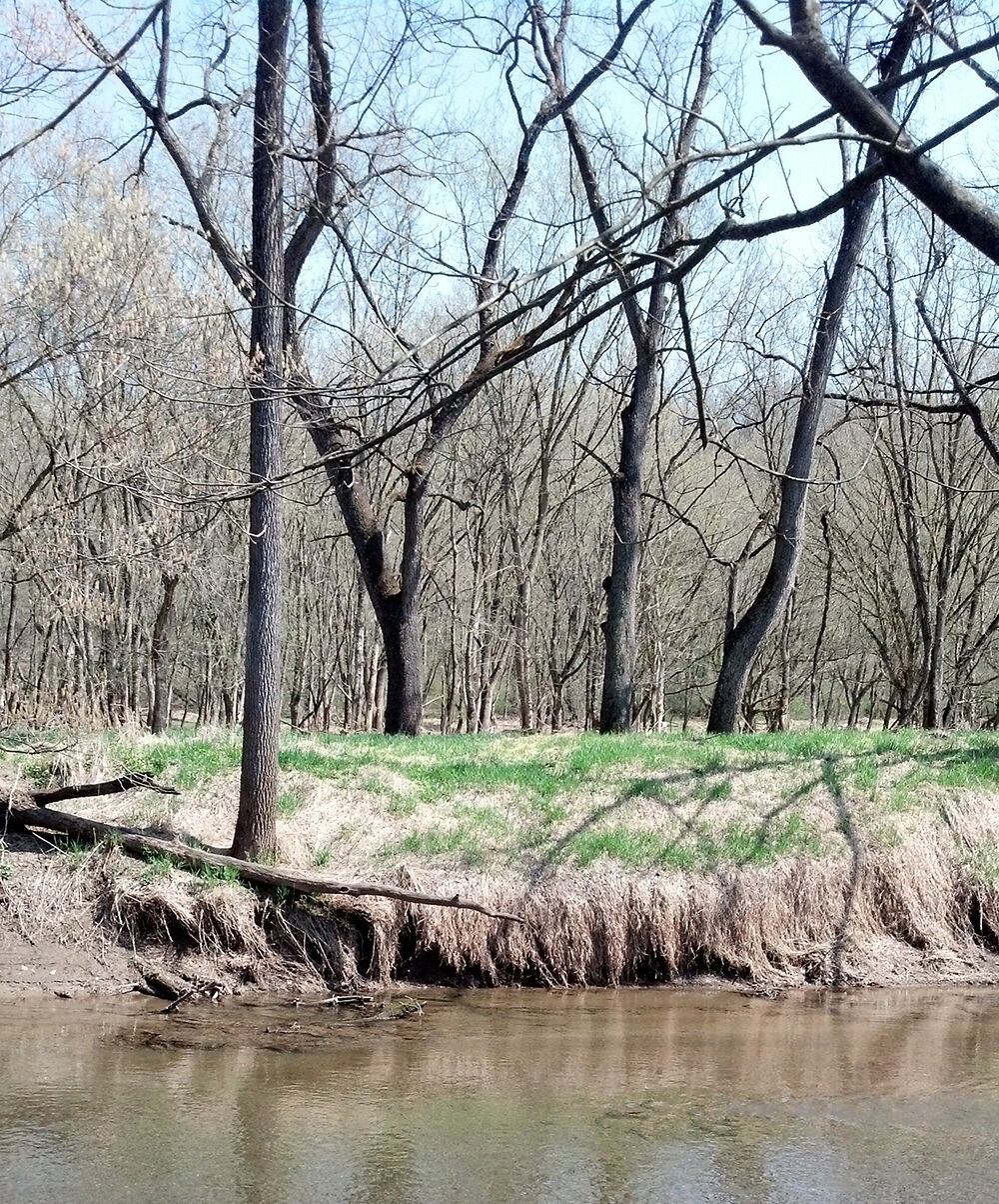 Streambank with groundcover
