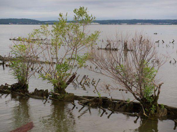 Mallows Bay vessels, Potomac River