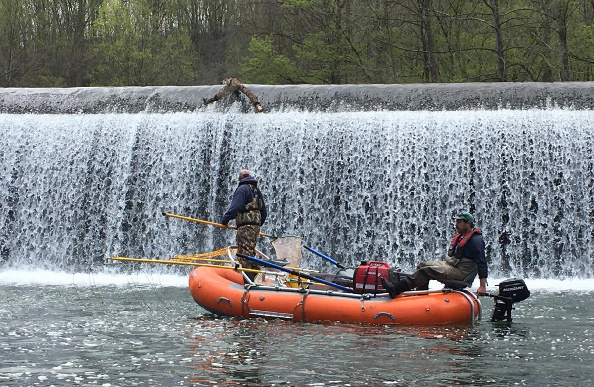 Electrofishing in Patapsco River