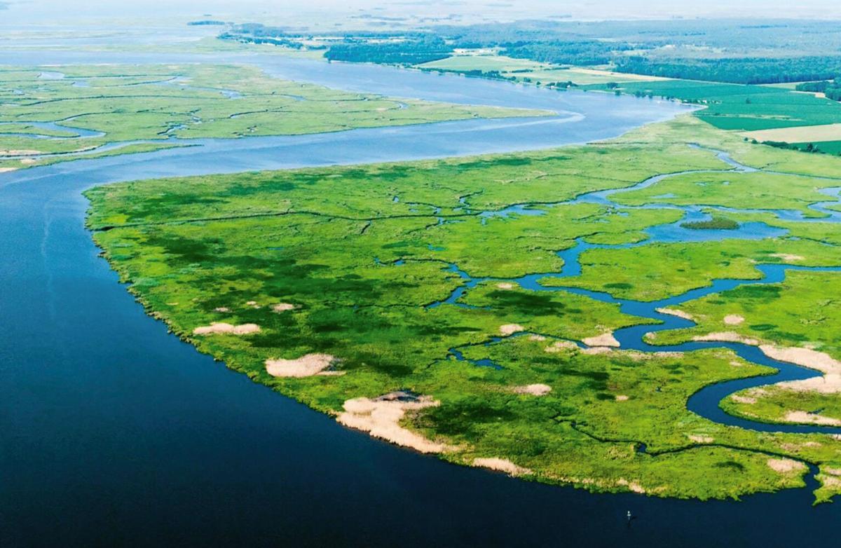 Wetlands along Nanticoke River, MD
