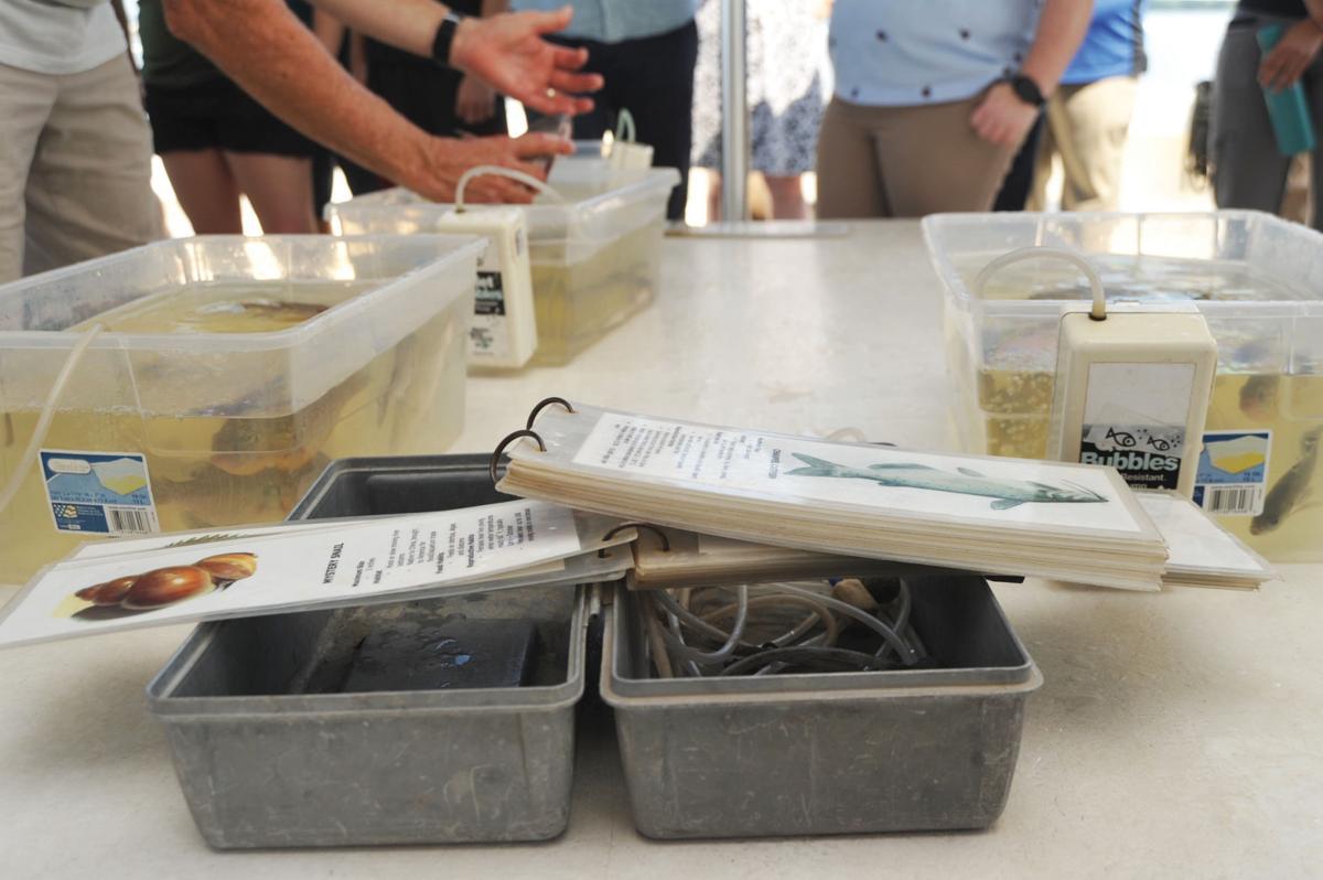Identifying fish