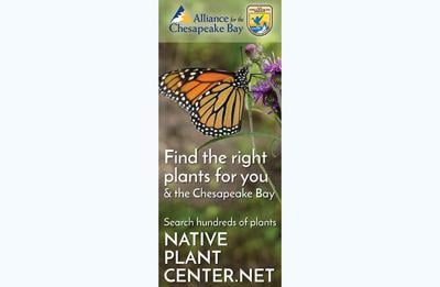 New online resource makes it easier to plant, maintain native species