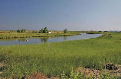 Poplar Island MD marsh