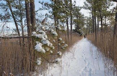 Winter trail at Taylors Island, MD