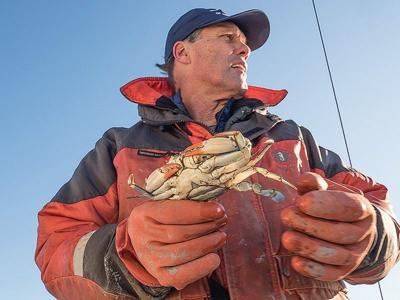 Winter dredge crab survey uses the past to divine the future