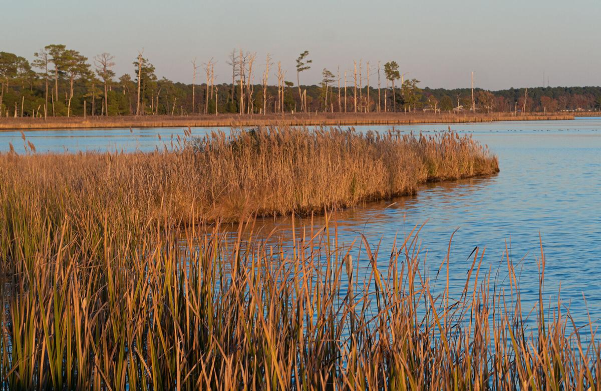 Marsh at Blackwater National Wildlife Refuge
