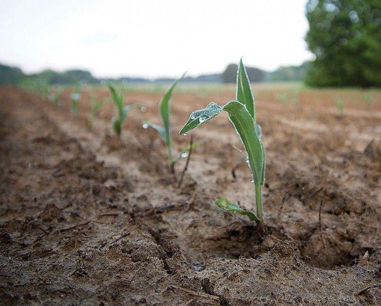 Young crop closeup 2