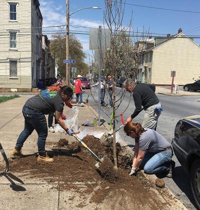 Harrisburg PA tree planting