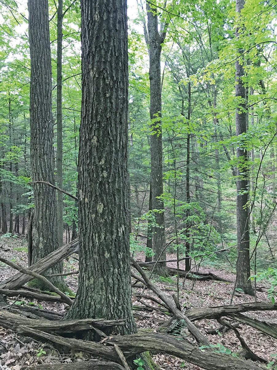 Forest over shale bedrock