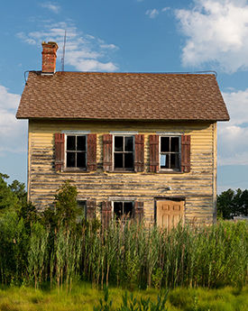 Phragmites by an abandoned house