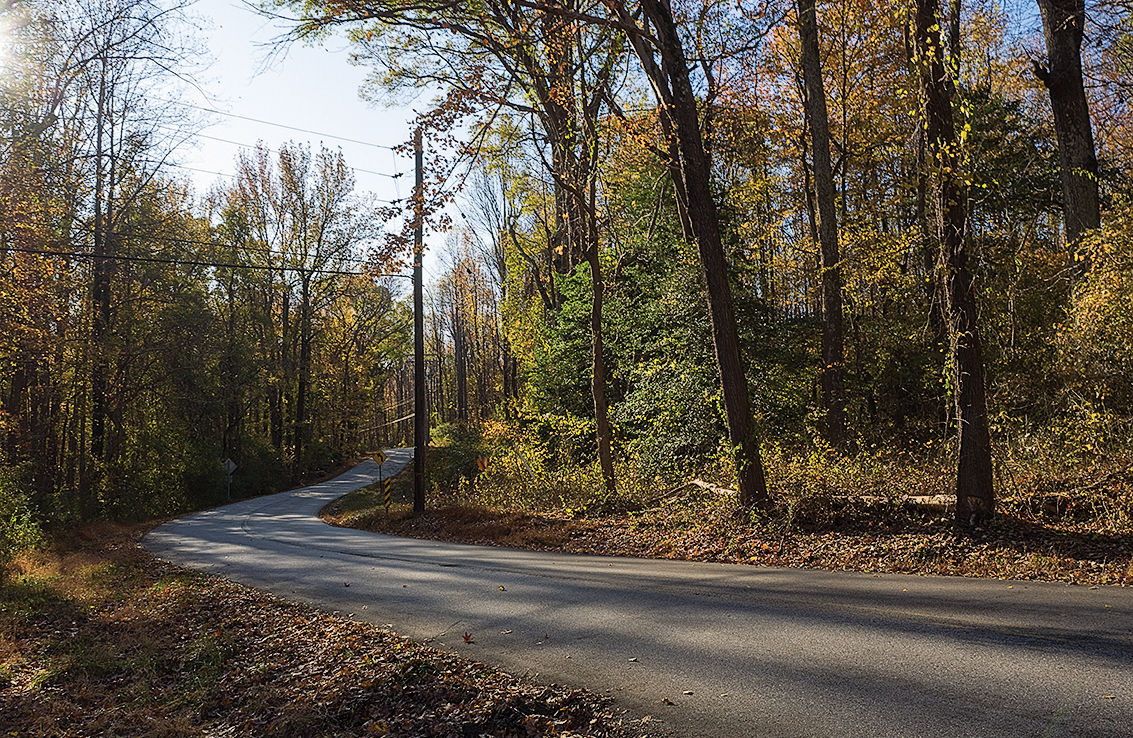 Forest road Anne Arundel MD 2