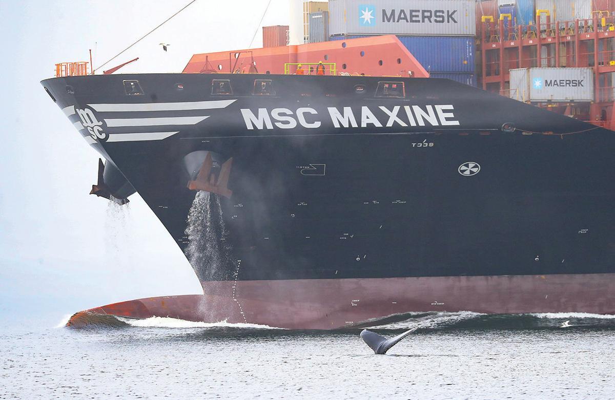 Whale near cargo ship