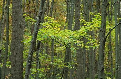 Depletion of nitrogen in forest soil could reduce trees' ability to offset climate change